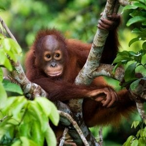 Borneo Tour with flights