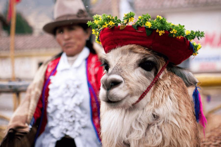 Llama and peru person