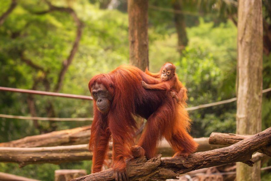 8 Day Wild Borneo MyHoliday2