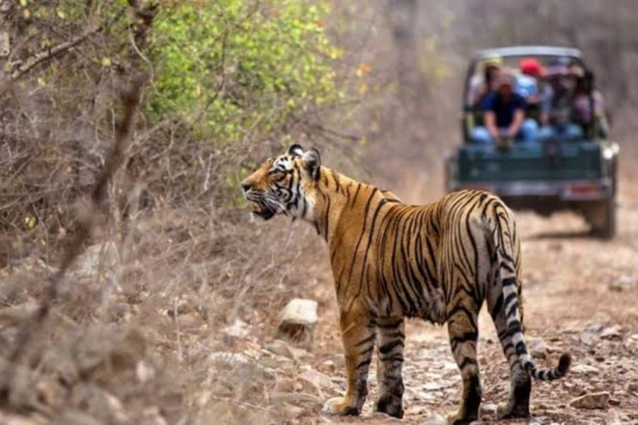 Ranthambore Tiger Safari India Tour